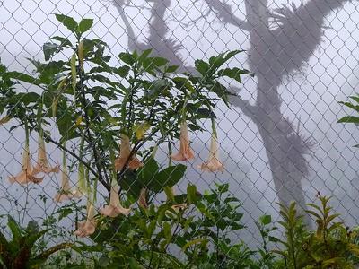 plantsinfog.jpg