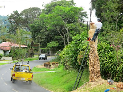 treecarver.jpg