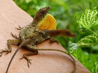 lizardsex.jpg