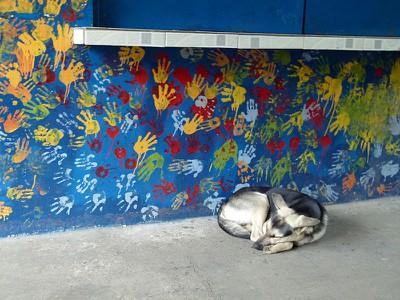 schooldog.jpg
