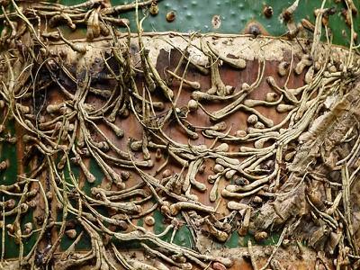bamboopattern.jpg