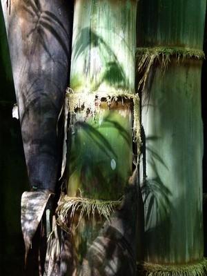 bambooshadows-1.jpg