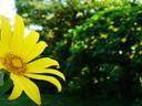 daisytree.jpg