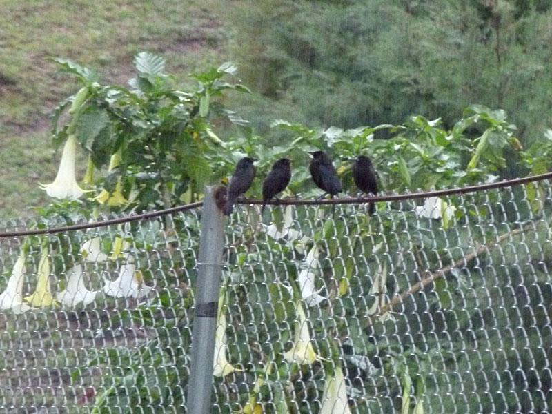 birdsinrain.jpg