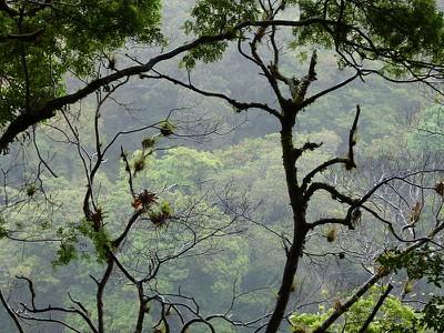 fincaforest.jpg