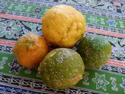 lemonsontable.jpg