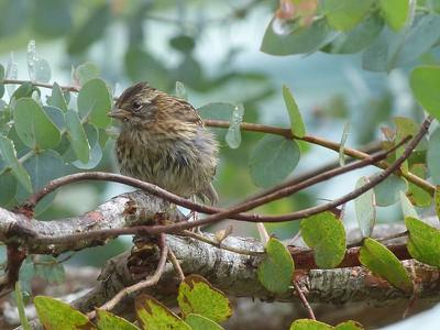 littlebrownbird.jpg