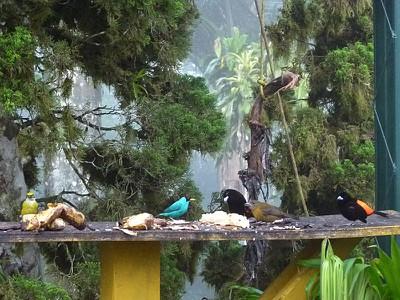 Bird Tableau
