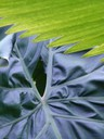Philodendron and Palm