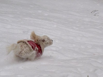 Snow Dash