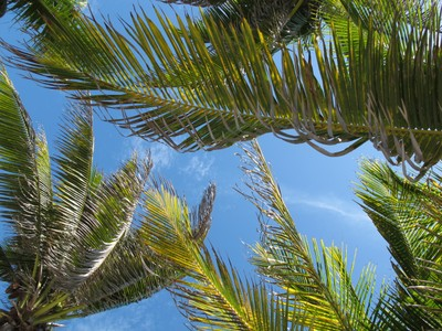 Lying on the beach looking up at Paamul's Palm Trees