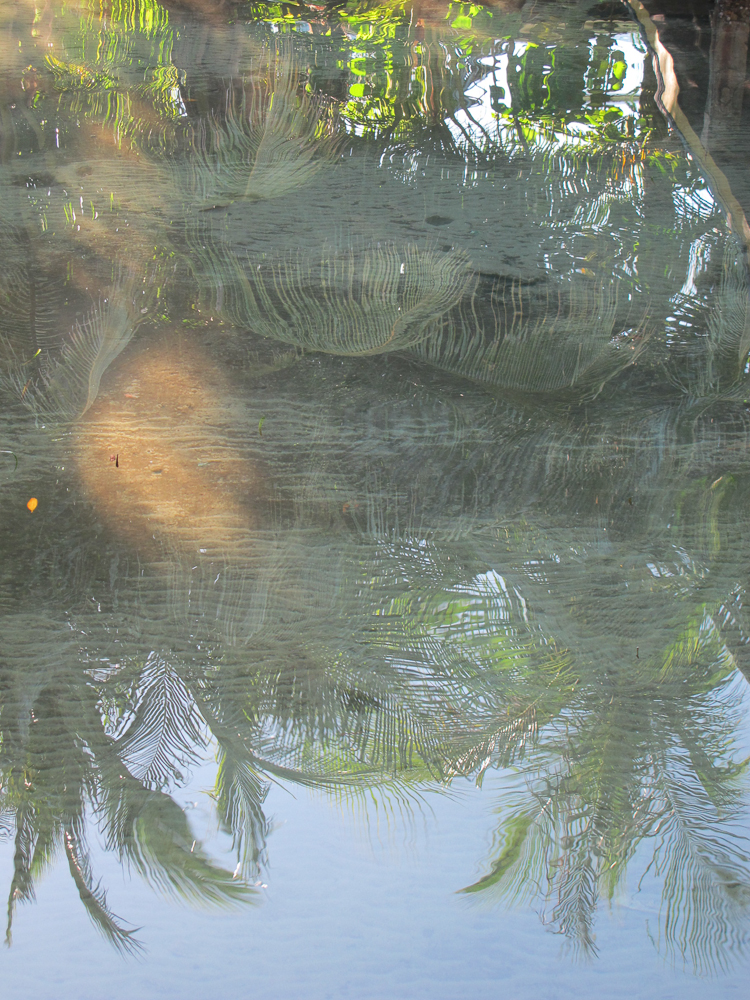 Palms reflected in the shallow waters of Saigon Bay