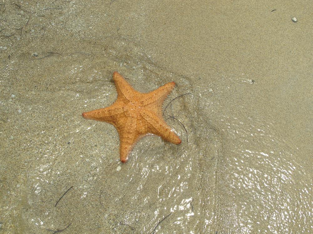 Starfish at Starfish Beach