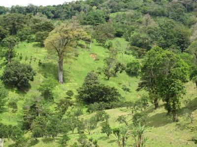 Lush countryside in Boquete, Panama