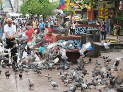 Feeding the pigeons in Casco Viejo