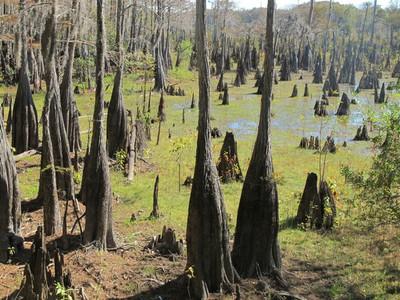 Dead Tree Lake, Wewahitchka, FL